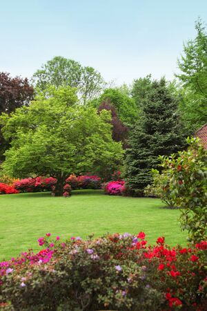 Colourful spring garden with red and pink flowering azaleas bordering a neatly trimmed lawn