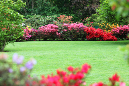 landscape garden: Beautiful garden with flowering shrubs, a neat manicured lawn and colourful display of pink and red azaleas Stock Photo