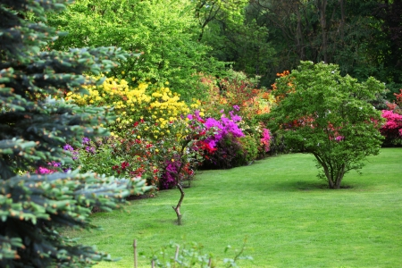 flowering: Colourful flowering shrubs in a spring garden in shades of yellow, pink and red bordering a neatly manicured lush green lawn with a backdrop of dense trees Stock Photo