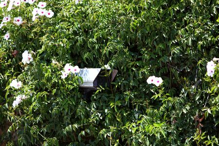 are hidden: Security camera hidden in greenery and foliage of a flowering shrub keeping a surveillance watch on the surroundings Stock Photo
