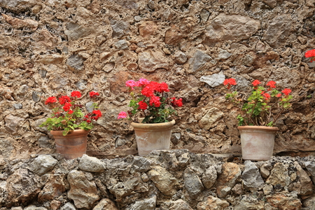 Colourful potted red geraniums in old terracotta pots standing on an outdoor ledge on an old stone garden wall photo