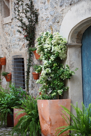 Old terracotta clay pots filled with potted shrubs and plants outside the entrance door to a rural dwelling photo