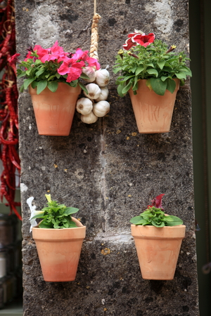 Four terracotta plant pots filled with colourful flowering plants mounted on a wall or pillar with a bunch of garlic left out to dry photo