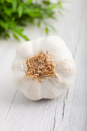 pungent: Fresh whole garlic bulb used as a pungent flavouring in cooking, with a view to the bottom of the bulb as it lies on a rustic white painted wooden surface Stock Photo
