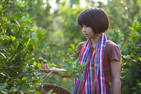 Asian girl work in the lime garden.