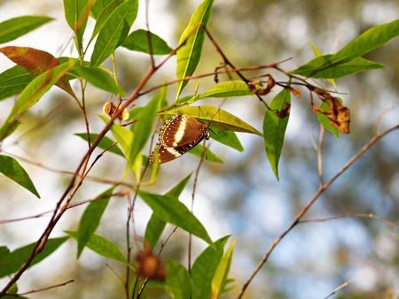 amongst: A butterfly amongst foliages