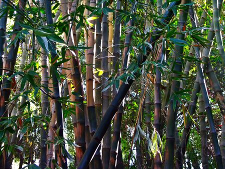 Asian bamboo forest Stock Photo - 1354757