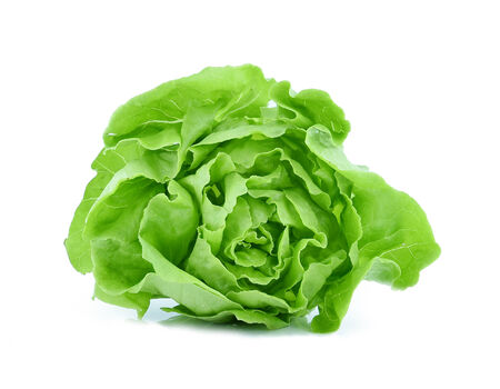 cos: Cos Lettuce on White