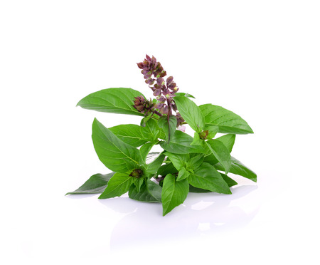 Sweet Basil on white background Banque d'images