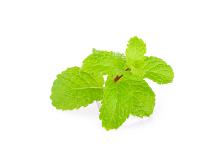 mint leaves on the white background