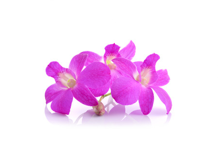 pink orchid phalaenopsis. Bouquet of flowers orchids.