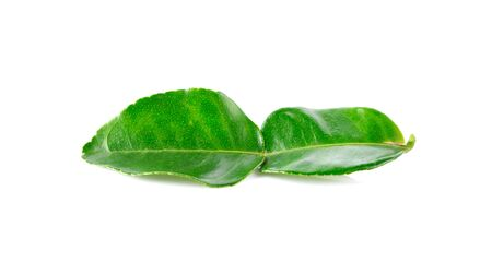 Kaffir lime leaves on white background Zdjęcie Seryjne