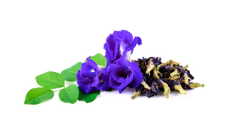 fresh and dried butterfly pea on white background