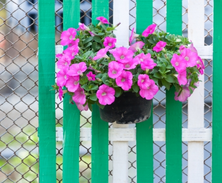 flower in pot on wooden fence Stock Photo - 17350807