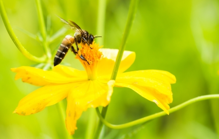 Bee on yellow flower in the park