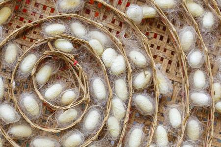 Close Up de cocons de vers à soie en nids panier en bambou Banque d'images - 62157528