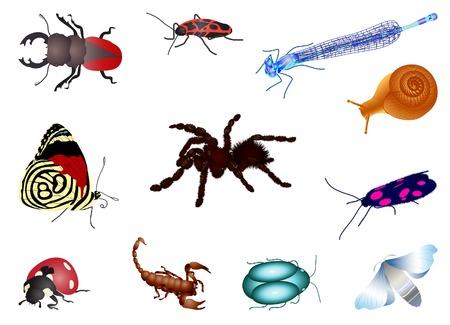 Set of bugs Vector