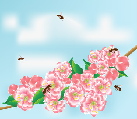 Bees fly to the flowering branch on a background blue sky with clouds