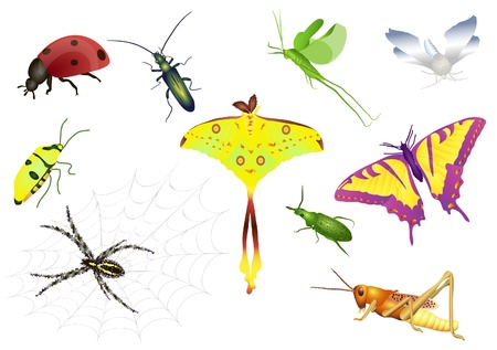 Set of colorful beetle, ladybird, moth, butterfly, grasshopper, spider Illustration