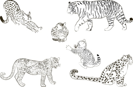 A set of  large predatory cat  Vector illustration  Vector