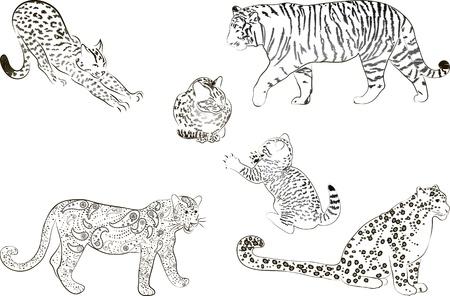 cartoons outline: A set of  large predatory cat  Vector illustration