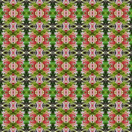 tubular flowers: Pink Bouquet of Quisqualis Indica flower is ivy flower seamless use as pattern and wallpaper.