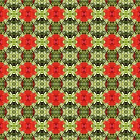 rosemallow: Full bloom of red hibiscus flower seamless use as pattern and wallpaper