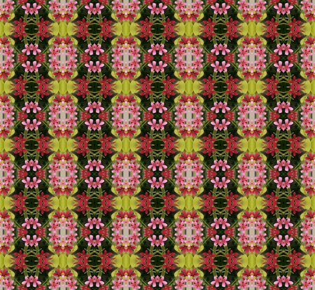 comrades: Beautiful of five flower petals bloom on tree seamless use as pattern and wallpaper. Stock Photo