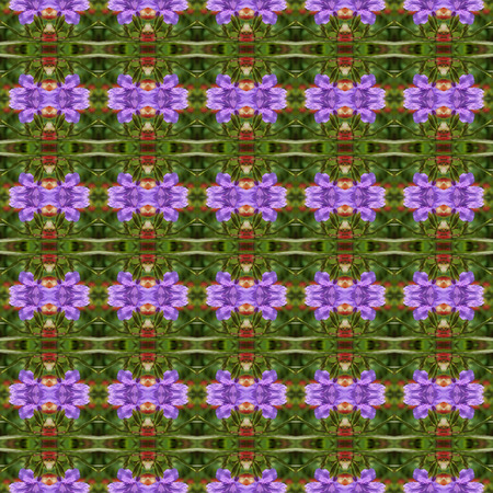 acanthaceae: Ruellia tuberosa Linn in full bloom seamless use as pattern and wallpaper.