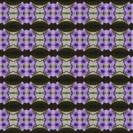 acanthaceae: Ruellia tuberosa Linn  bright purple in full bloom seamless use as pattern and wallpaper. Stock Photo