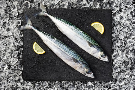 Fresh fish on ice on a black stone table top view photo