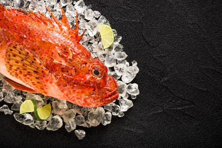 Fresh scorpion fish on ice on a black stone table top view Zdjęcie Seryjne