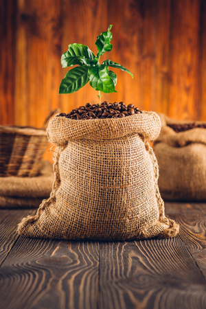 Bag of roasted coffee and coffee plant on wooden table.