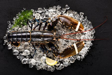 Frozen meat: Raw lobster on ice on a black stone table top view