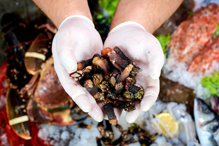 생선 가게에서 스페인어 갑각류 (percebes)을 제시 판매자