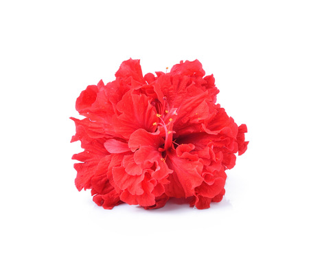 malvaceae: red flowers isolated on white background Stock Photo