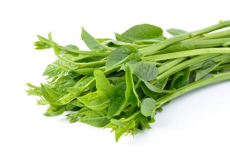 laxatives: Malabar spinach or Ceylon spinach isolated on white