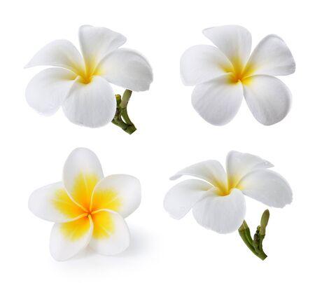Tropical flowers frangipani (plumeria) isolated on white background photo