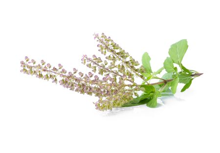 tulasi: Basil flower on white background