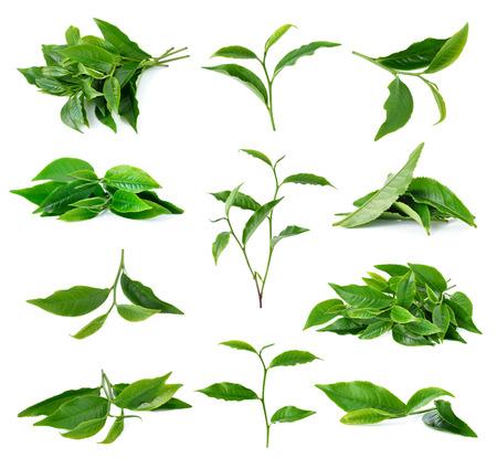 白い背景に分離された茶葉 写真素材