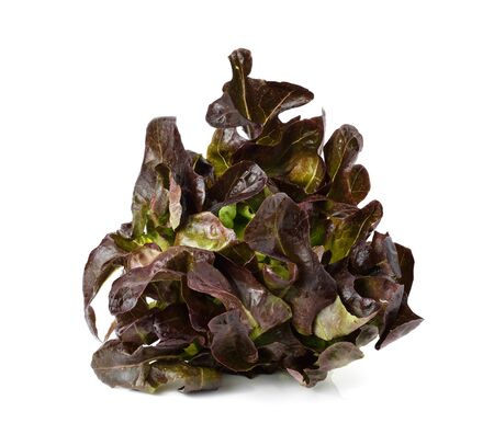 frilly: red oak leaf lettuce on a white background