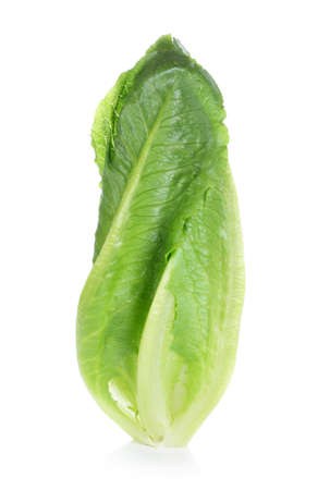 cos: Fresh cos lettuce on white background