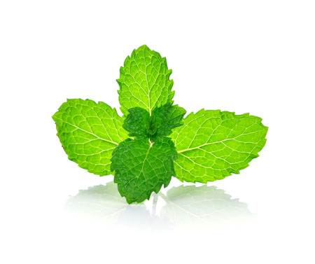 directly: fresh mint leaves on a white background