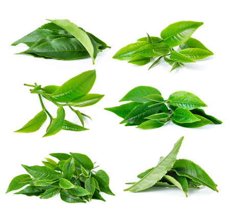 green and white: green tea leaf isolated on white background