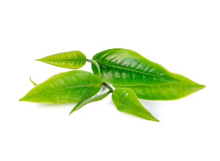 leaves green: Green tea leaf isolated on white background