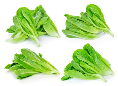 cos: fresh cos lettuce on a white background. Stock Photo
