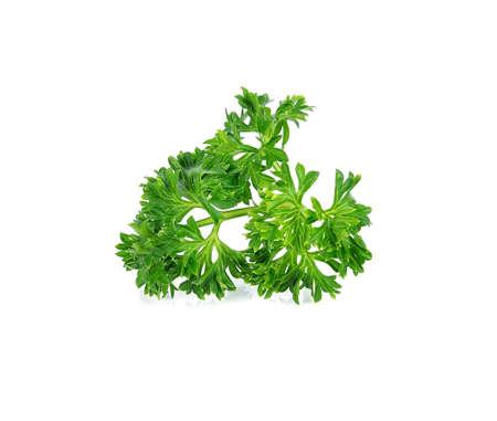 garnish: parsley isolated on white background Stock Photo