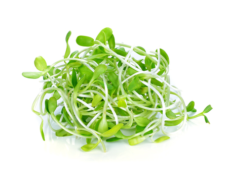 sprout growth: green young sunflower sprouts isolated on white background Stock Photo