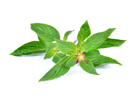 herbalism: basil leaves isolated on white background Stock Photo