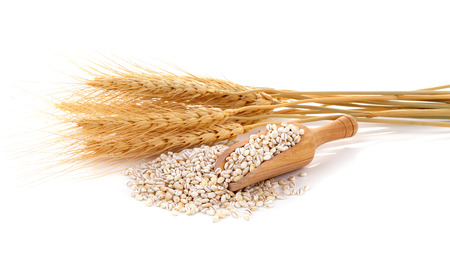 wheat kernel: Barley grains isolated on white background.
